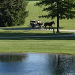 Carriage rides around the grounds