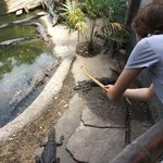 Feeding the Gators