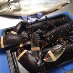 Fresh lobster caught locally at Boulmer