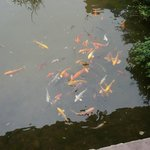 feed fish from balcony