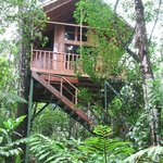 Our treehouse-Toucan
