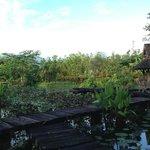 The extensive gardens