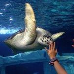 Linda tartaruga marinha