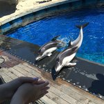 Beautiful dolphins performing