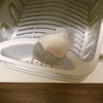 Dirty sock in the dish rack...no dishes in the room