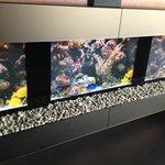 Virtual aquarium in lounge near breakfast room