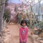 serra cactus