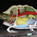 Макет строения черепахи