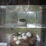 Черепаховые яйца