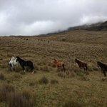 Wild Horses!
