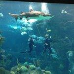 Shark Demo