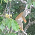 One of many monkeys we saw when canoeing through the jungle