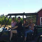 Wine Cube Tour at Trattore Estate and Dry Creek Olive Oil Co.