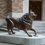 O mascote da Universidade