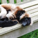 dozing on a bench. so relaxed