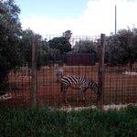 sezione fattoria - zebra