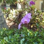 Orquídeas en el jardín