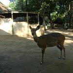 Een van de bosbokken van Letaba  (maart 2014)