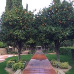 A really cool orange grove