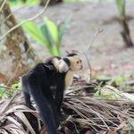 Mom and Baby Monkey Near Lodge