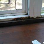 Yucky waterpark window - Dear Hotel, Please clean your windows!!