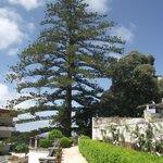 Jardim do Pinheiro que fica nos fundos do palácio.