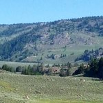 Lamar Valley, summer 2014
