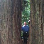 On a Living Double V tree