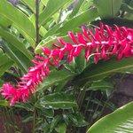 some flora
