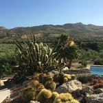 view over the olive grove from the pool