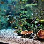 аквариумы есть большие и маленькие