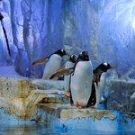 и пингвины есть тоже
