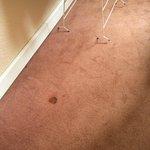 La moquette de la chambre.