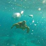 Sea Turtle with Aloha Kayaks Maui