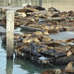 sea lions at the wharf
