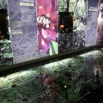 Rain forest exhibit