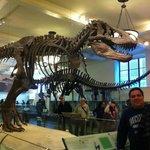 area dos dinossauros