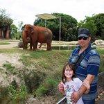 Sabana Africana y los Elefantes