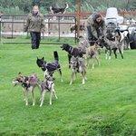 Dog Sled demonstration