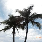 Palms From The Pool