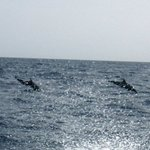 Dolphins in the water while on our way to the Blue Hole