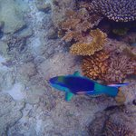 snorkeling in shallow waters
