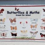 Abundance of Butterflies