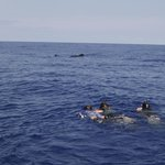 Snorkeling with pilot whales