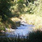 Maguires Creek