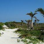 浜辺の脇の散策路 (104222533)