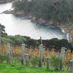 beautiful vineyard at Waiheke Island