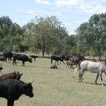 Au cœur du troupeau