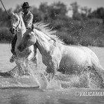 le sublime lulu avec c'est chevaux sauvage