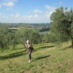 Les oliviers et la vue sur Florence